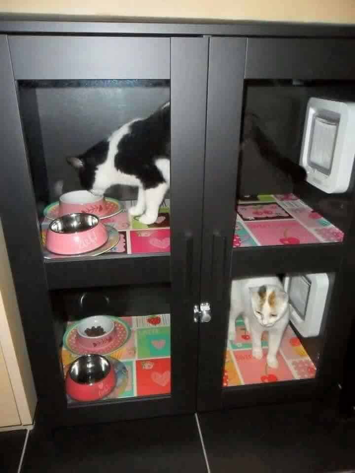 Cat Food Station Dog Proof